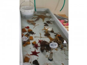 These animals were collected from 15 m depth at Cape Armitage. Note the Pycnogonids (dinner plate-sized sea spiders)