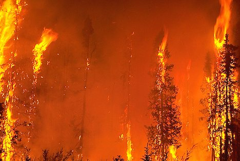 Fire consumes black spruce forest