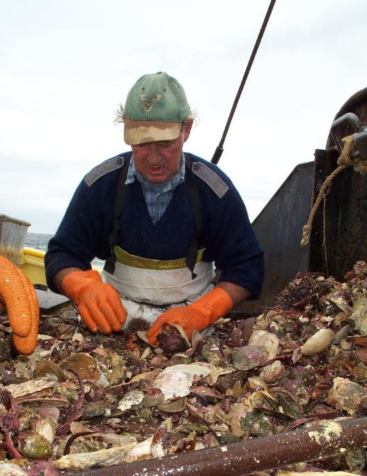 Fisherman Jimmy Foggo 'culching' oysters on the Golden Lea