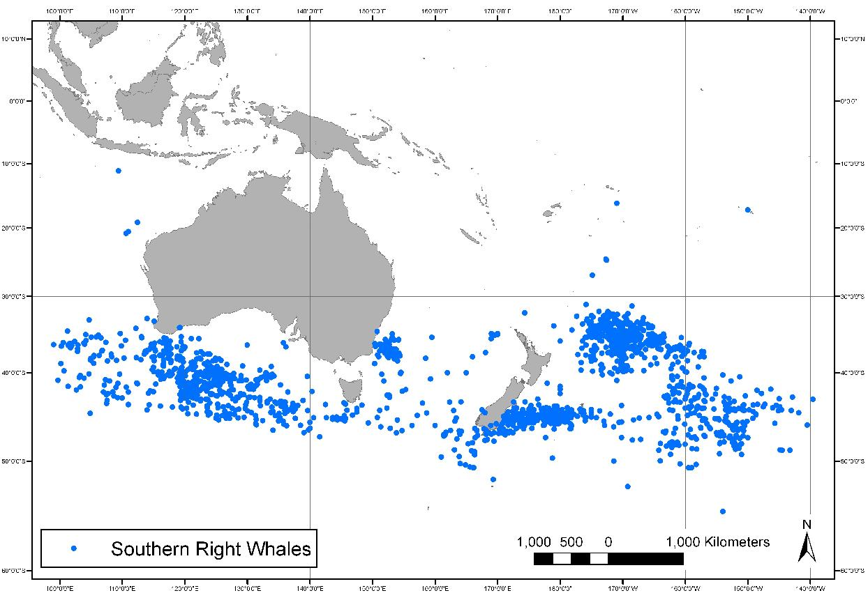 Sighting locations of southern right whales by American whaling vessels: 1820-1925 Credit: Dr Leigh Torres and World Whaling History Project.