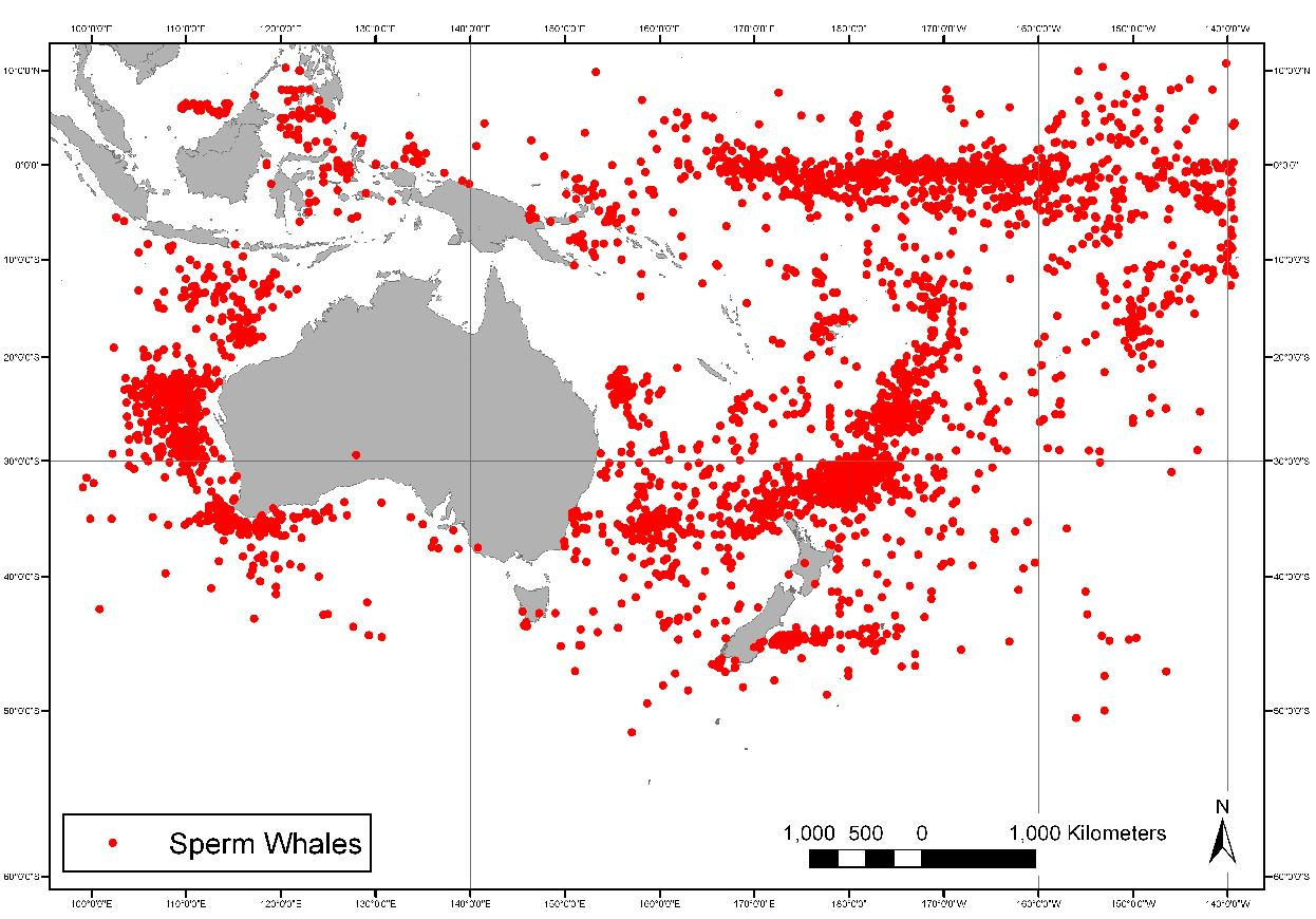 Sighting locations of sperm whales by American whaling vessels: 1820-1925 Credit: Dr Leigh Torres and World Whaling History Project.