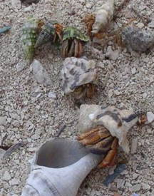 hermit_crab_queue