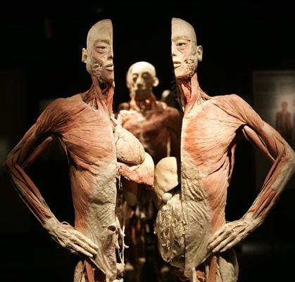 The BODIES exhibition