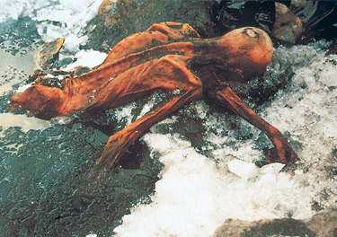 The position Otzi was found, trapped in glacial ice
