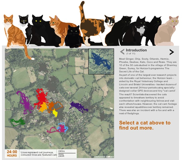 cat-survey-bbc