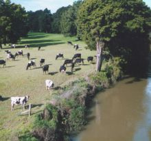 Dairy farms - a major source of diffuse pollutants in New Zealand rivers and one of the reasons water quality continues to decline. Source National Institute for Water and Atmosheric Research.