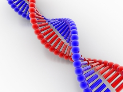right-DNA-red-blue-ID-10061973