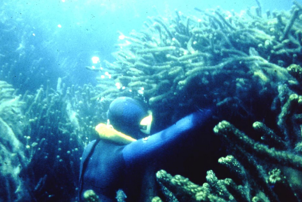 Diver in invasive weeds bed  Source: NIWA