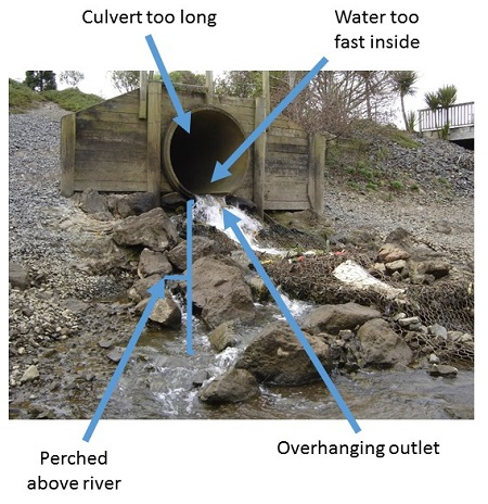 An example of a fish migration barrier caused by a poorly installed culvert.