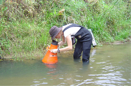 Surveying along the edges of a river – a favourite hiding place for freshwater mussels.