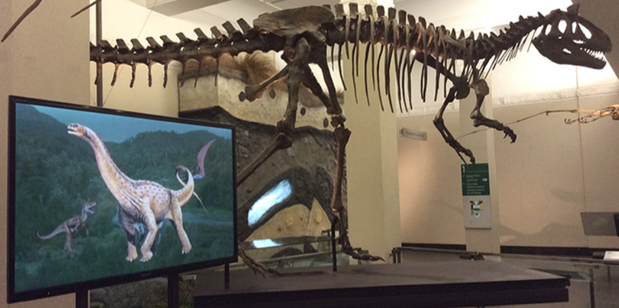 Joan Wiffen's story about discovering New Zealand dinosaurs plays on  a television screen in the Auckland War Memorial Museum.