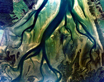 Featured image: Mangroves: 'Bioshields' of our coastlines