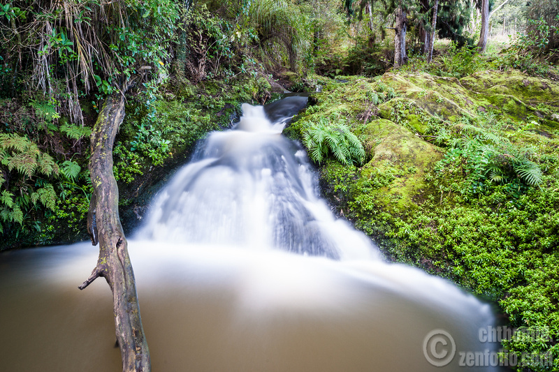 Image: Auckland nature reserves: Paremoremo