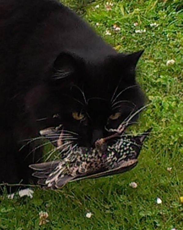 cat with starling