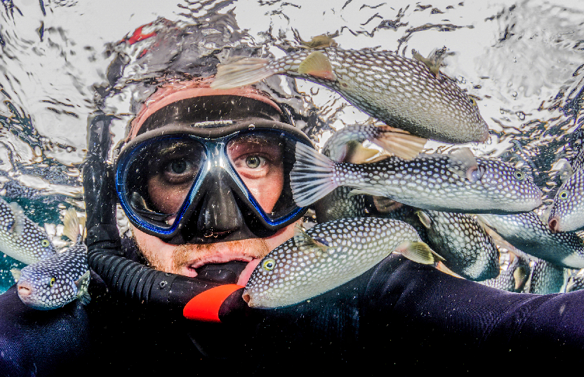 Scientific diver Crispin Middleton is surrounded by panicked Starry Toado Pufferfish at the Poor Knights Islands Marine Reserve. The Starry Toado are rarely seen pelagic pufferfish which usually live in deep, blue, open water. On very rare occasions, the fish stray too close to land and immediately get attacked by hungry kingfish and snapper. The judges commented that they appreciated the tight crop and weight provided by Crispinís arms and body at the bottom of the image. ìIntense engagement with the view and excellent exposure and sharpness. The world would be a better place if more selfies were this good! Credit: Crispin Middleton
