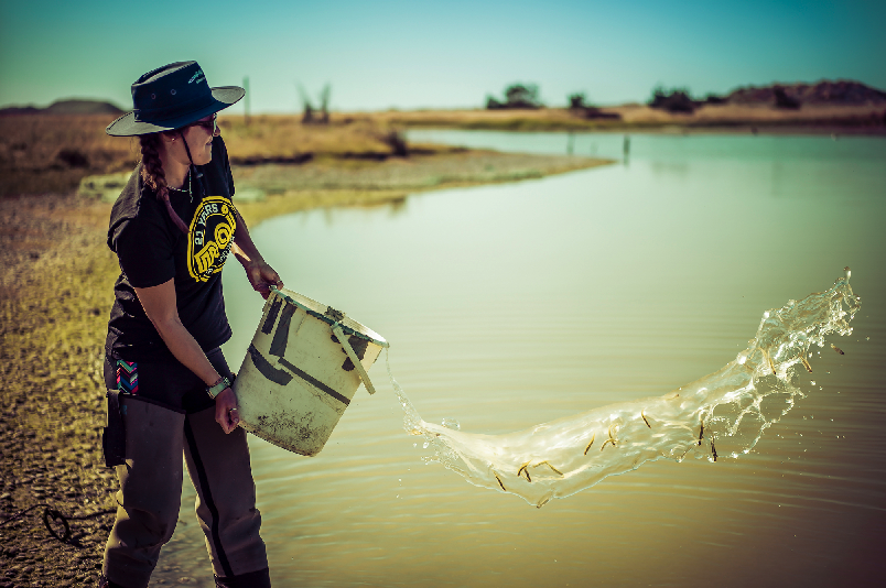 Returning some common smelt to Te Waihora (Lake Ellesmere). Credit: Shannan Crow