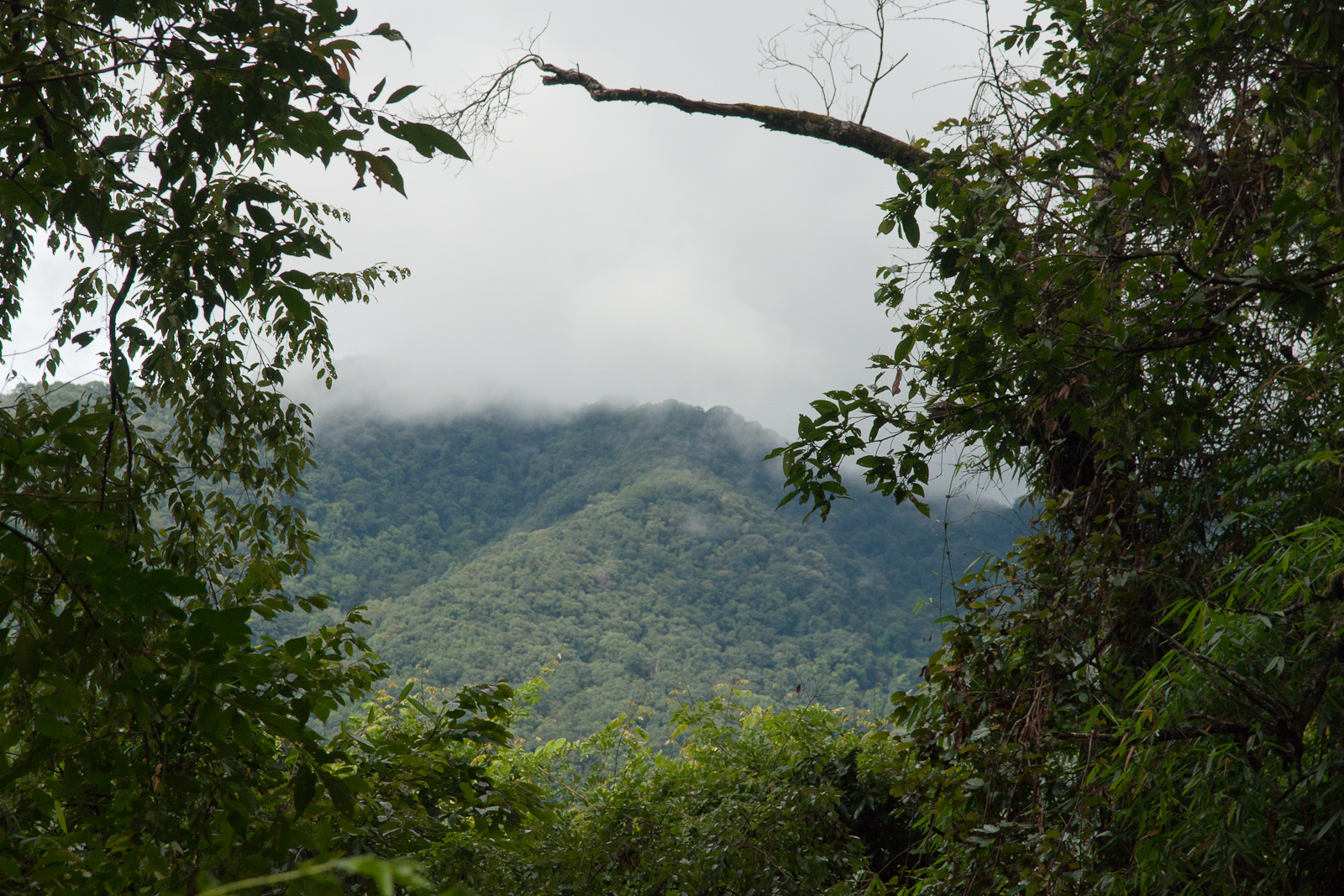 Featured image: The dark side of conservation- 2 rangers killed in Cambodia