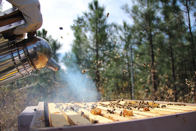 Featured image: Give bees a chance: the ancient art of beekeeping could save our honey (and us too)