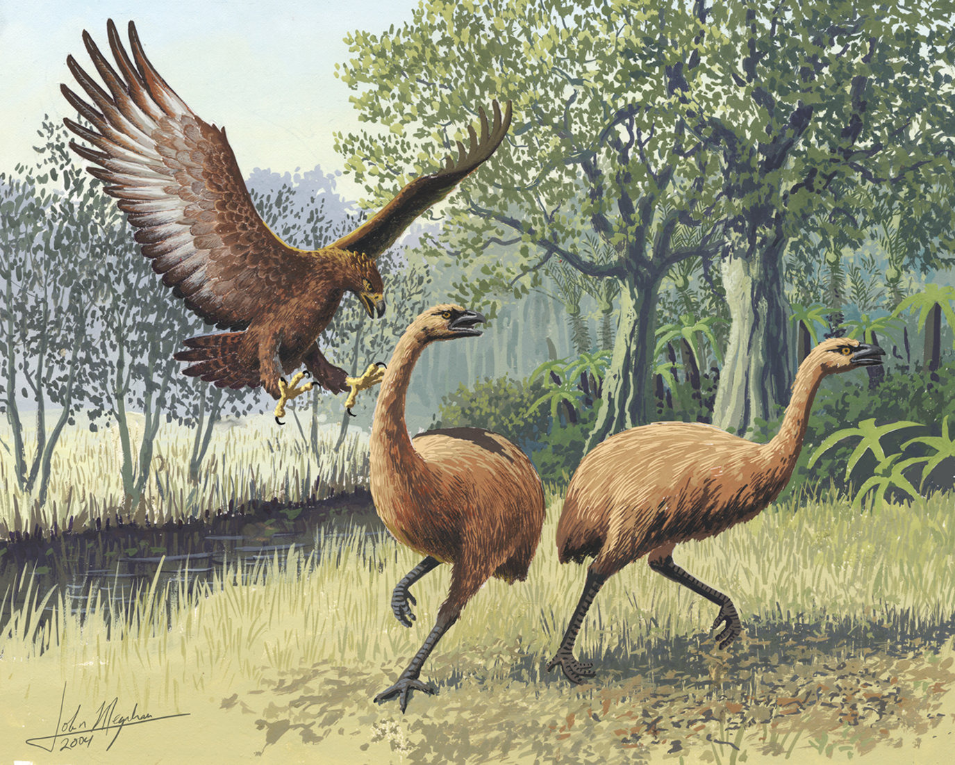 Image: Distinct diets of extinct moa