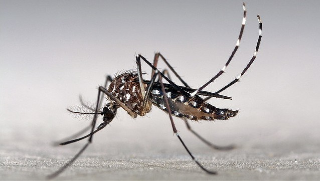 Featured image: Here&#8217&#x3B;s why we don&#8217&#x3B;t have a vaccine for Zika (and other mosquito-borne viruses)