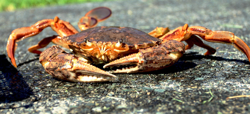 Image: Crabs hear turbines and stop developing