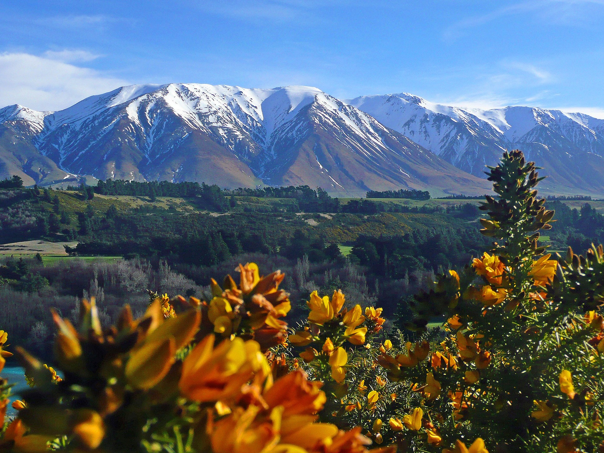 Featured image: Protecting New Zealand's natural treasures