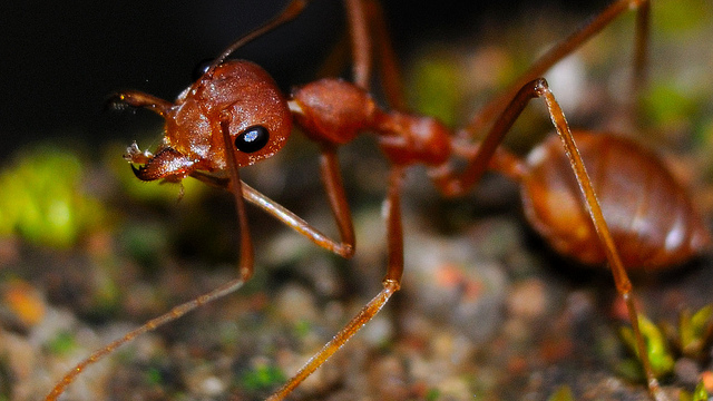 Featured image: Ant-tastic science