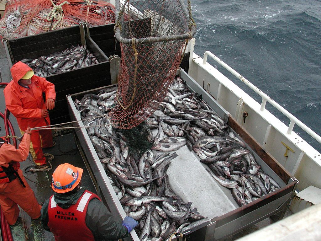 Featured image: New report: NZ's marine fisheries catch massively under-reported