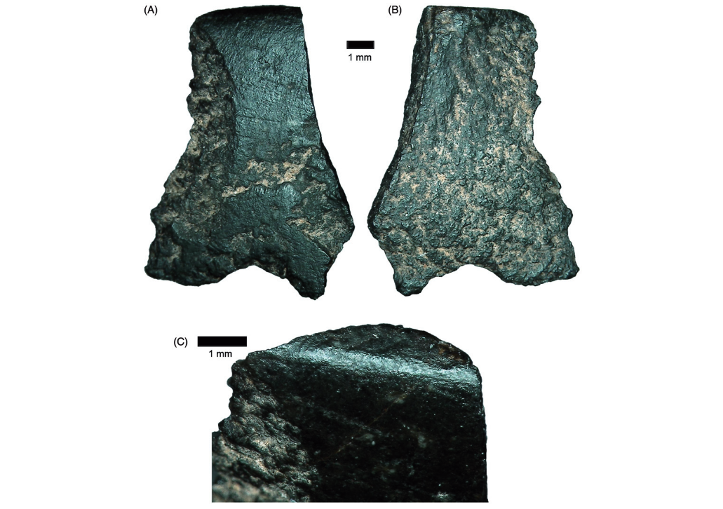 Featured image: The world's oldest axe shows the cut and thrust of academia