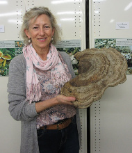 Susan van der Spuy holding a bracket fungus in the Fungarium at Landcare Research.