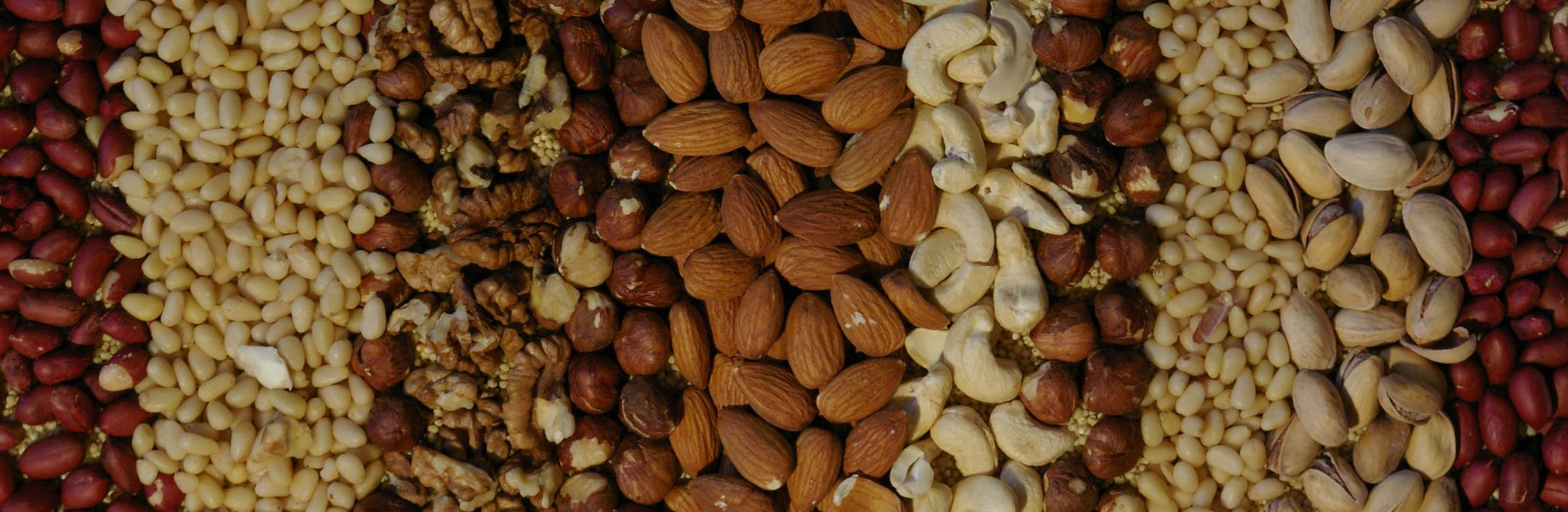Nuts are a key part of the Paleo diet. Credit: Flickr / Mariya Chorna.