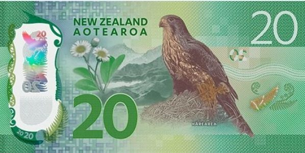 A bird in the hand is worth two in the bush. The kārearea features on the reverse of the New Zealand $20 note.
