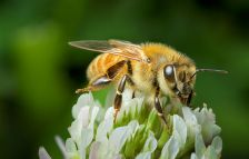 Pollinators provide a sweet deal for farmers. Fickr / And Murray