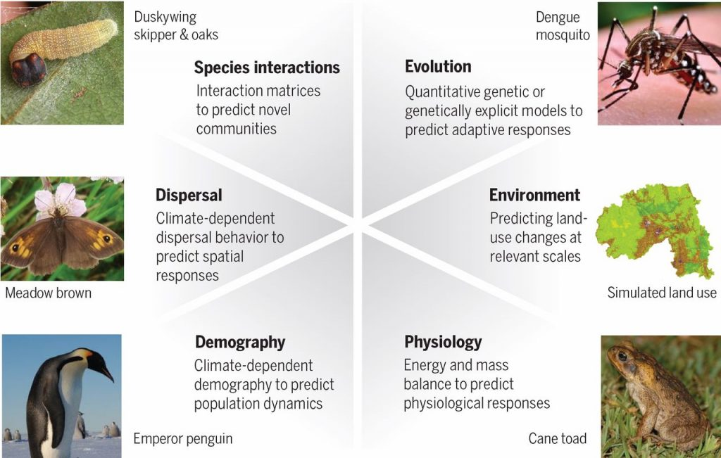 Emerging models are beginning to incorporate six key biological mechanisms that can improve predictions of biological responses to climate change. Models that include biological mechanisms have been used to project (clockwise from top) the evolution of disease-harboring mosquitoes, future environments and land use, physiological responses of invasive species such as cane toads, demographic responses of penguins to future climates, climate-dependent dispersal behavior in butterflies, and mismatched interactions between butterflies and their host plants. Despite thesemodeling advances,we seldom have the detailed data needed to build thesemodels, necessitating new efforts to collect the relevant data to parameterize more biologically realistic predictive models.