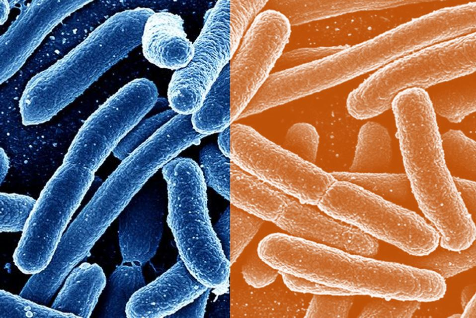 Featured image: The two faces of infectious disease threats: we need to respond to both