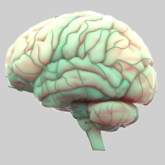 Hyponatremia can cause the brain to swell. Magic mine/Shutterstock.com