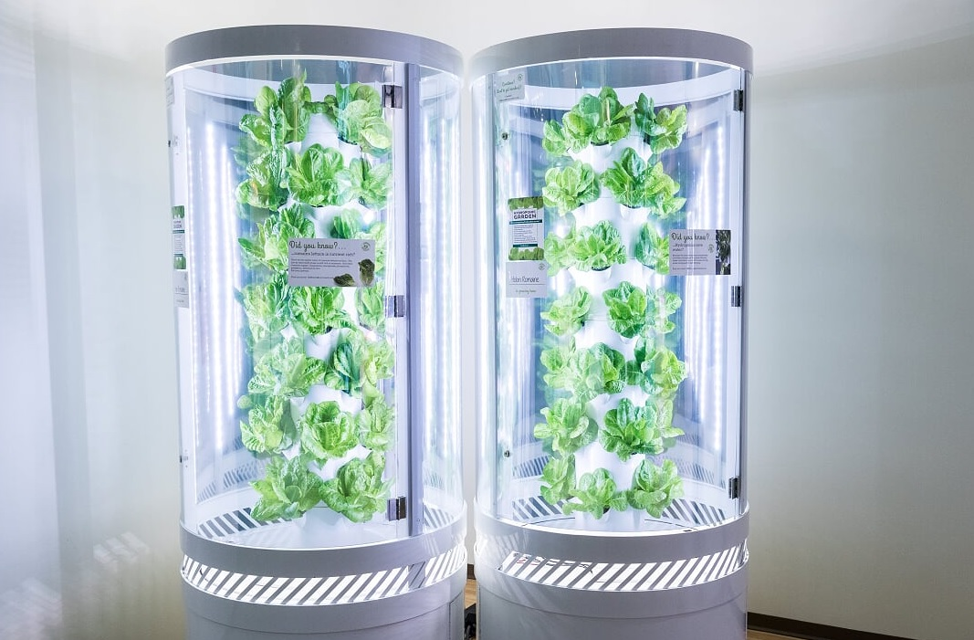 LED-lit pods like these grow leafy greens all over Microsoft's campus for staff consumption.