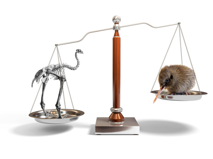 Featured image: De-extinction dilemma: Bring back the moa or save the kiwi?