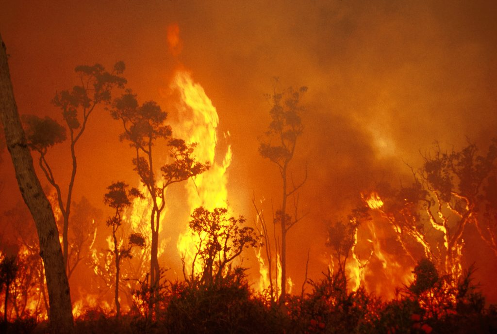 Bush fires: mass fatality