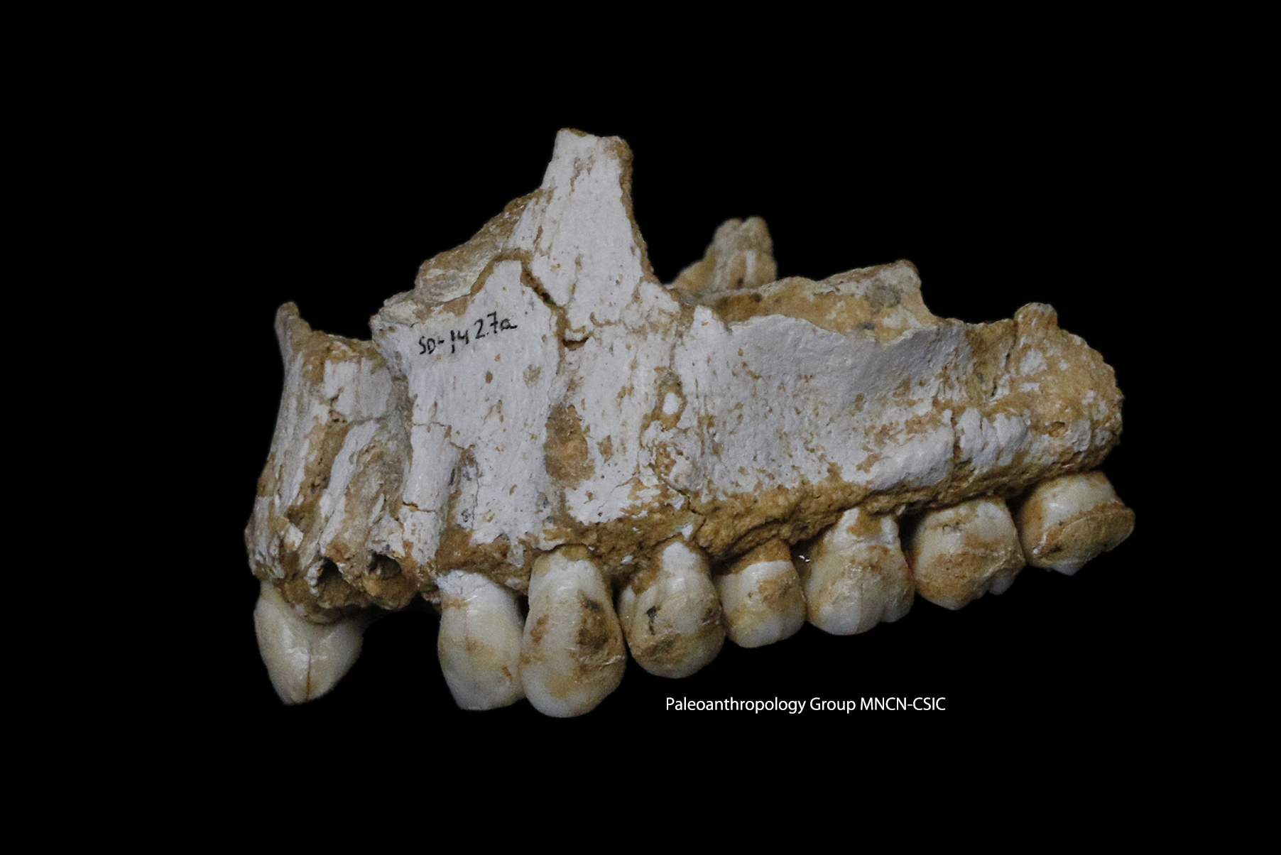 Image: Dental plaque DNA shows Neandertals used 'aspirin'