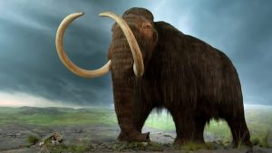 We can never bring back a mammoth