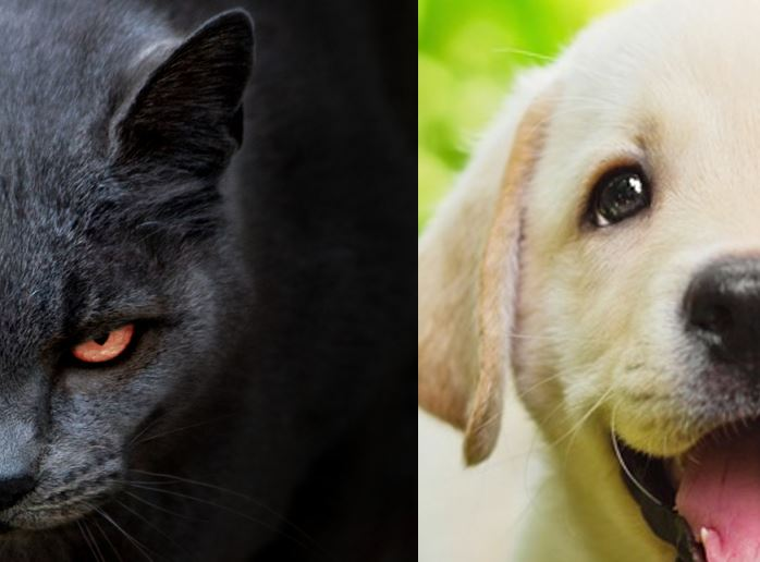 Image: Cats are evil, dogs are perfect, but they both have environmental impact