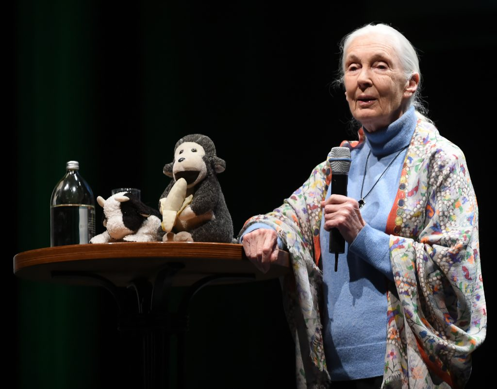 Jane Goodall speaks at the Regent on Sunday evening