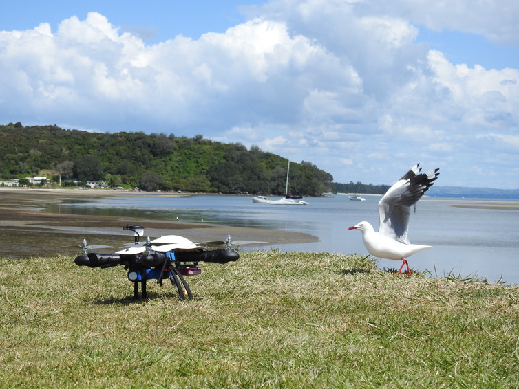 Featured image: Drones and wildlife – working to co-exist