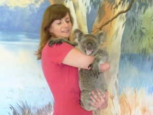 Koalas do not enjoy cuddles