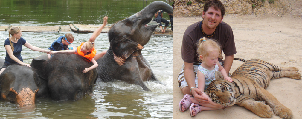 The Tiger Temple offers tiger petting AND elephant rides/ 2 for 1 on cruelty