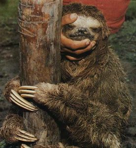 Sloths are not naturals when it comes to photo posing