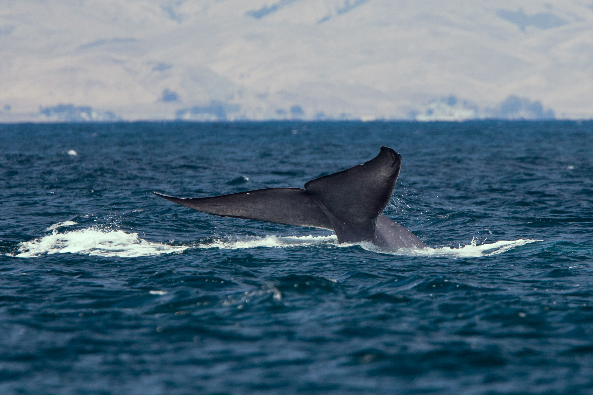 Featured image: NIWA Summer Series – The Sounds of Whales