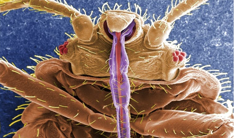 Featured image: Everything you never wanted to know about bed bugs, and more!