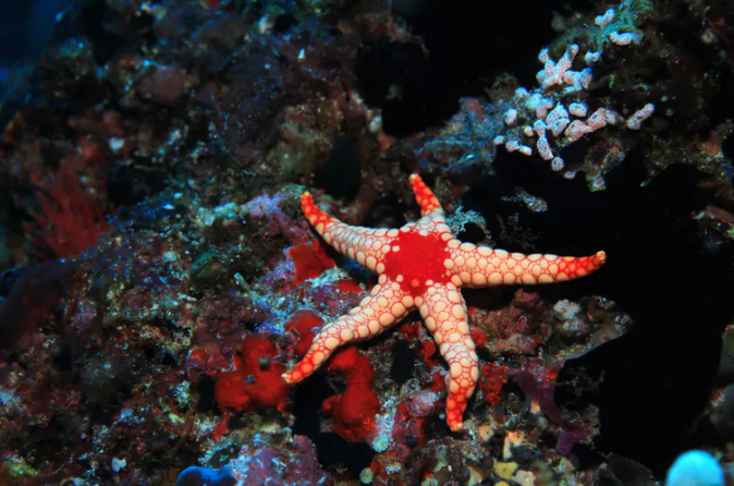 Featured image: Starfish can see in the dark (among other amazing abilities)